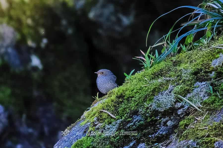 Bird at Srikhola