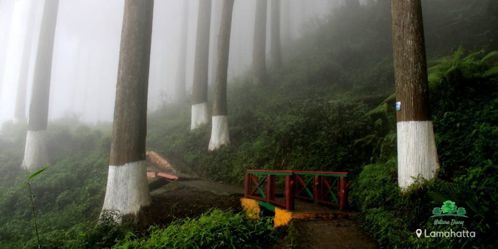 Lamahatta eco park