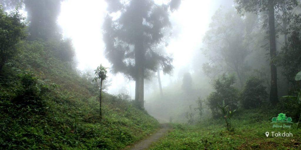 Takdah forest