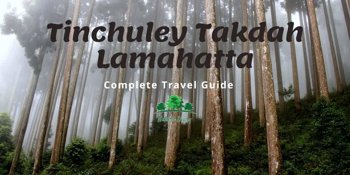 Tinchuley Takdah Lamahatta Travel Guide
