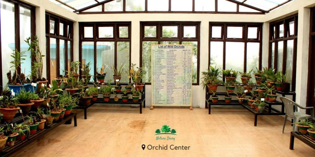 Tinchuley orchid house