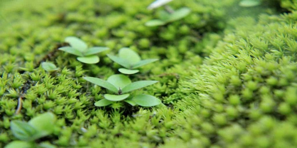 moss and garden at chota mangwa eco tourism complex