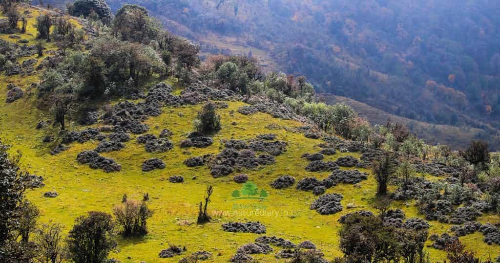 Grass land in Sandakphu trek