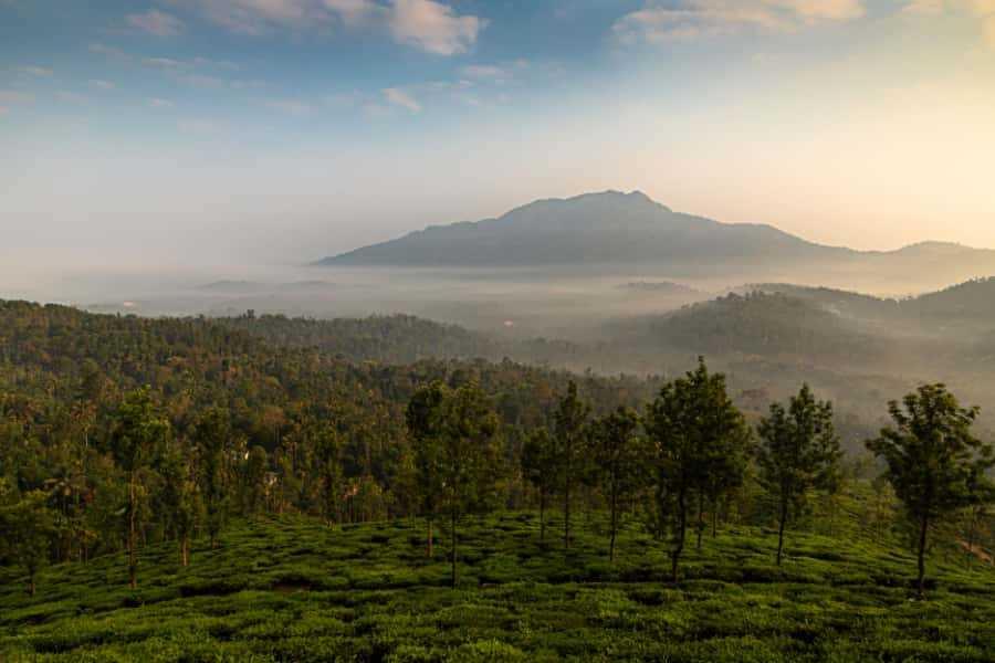 Wayanad Landscape