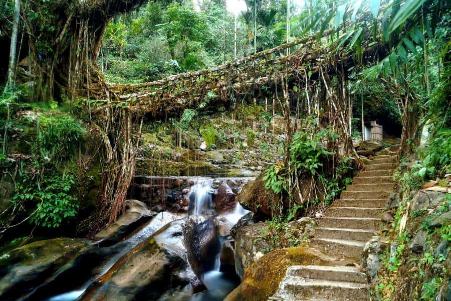 living root bridge stairs