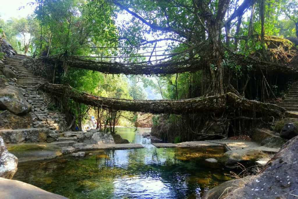 double decker living root bridge meghalaya