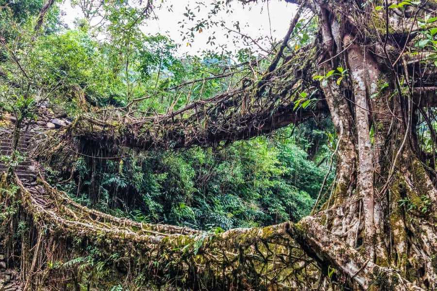 visit the double decker root bridge