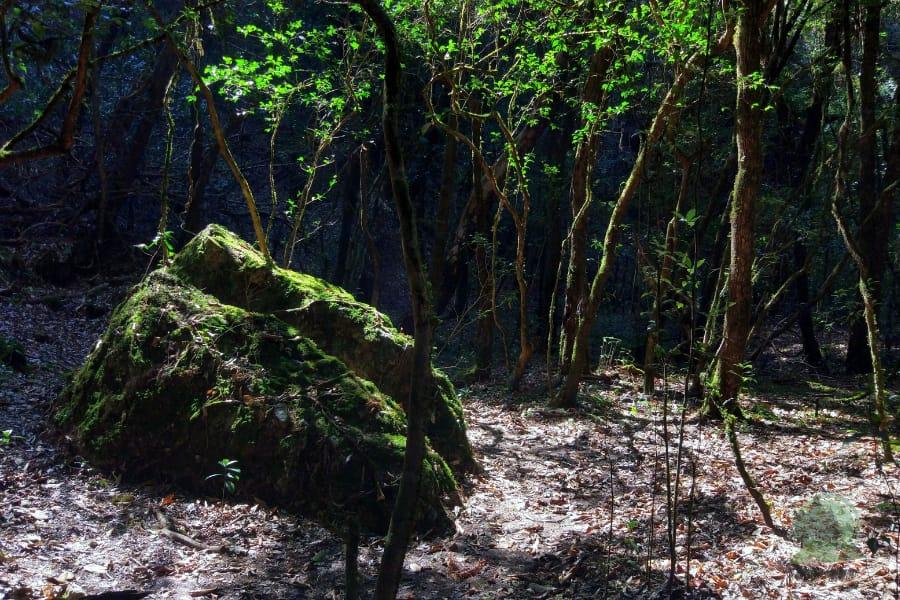 mawphlang sacred forest stone