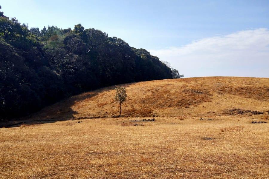 visit mawphlang sacred forest