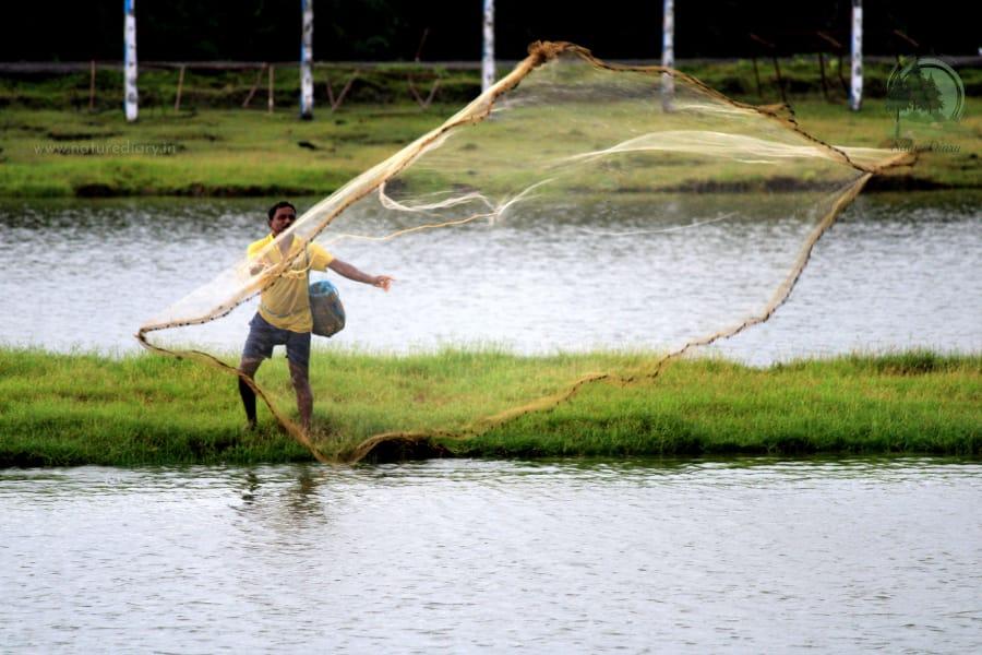 fisherman in Henry island