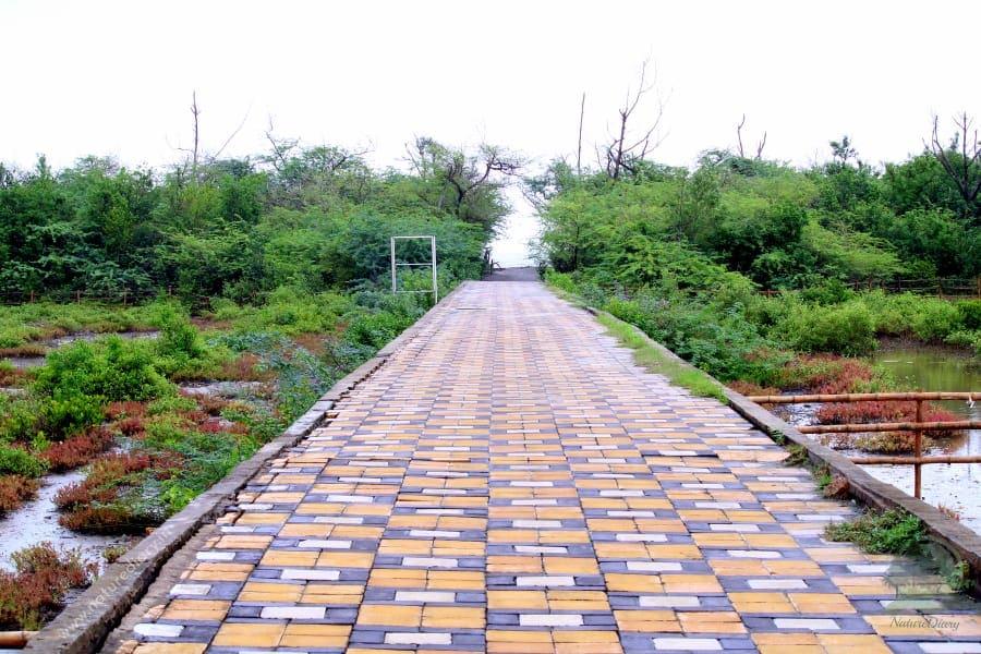 mangrove forest path to Henry island sea beach