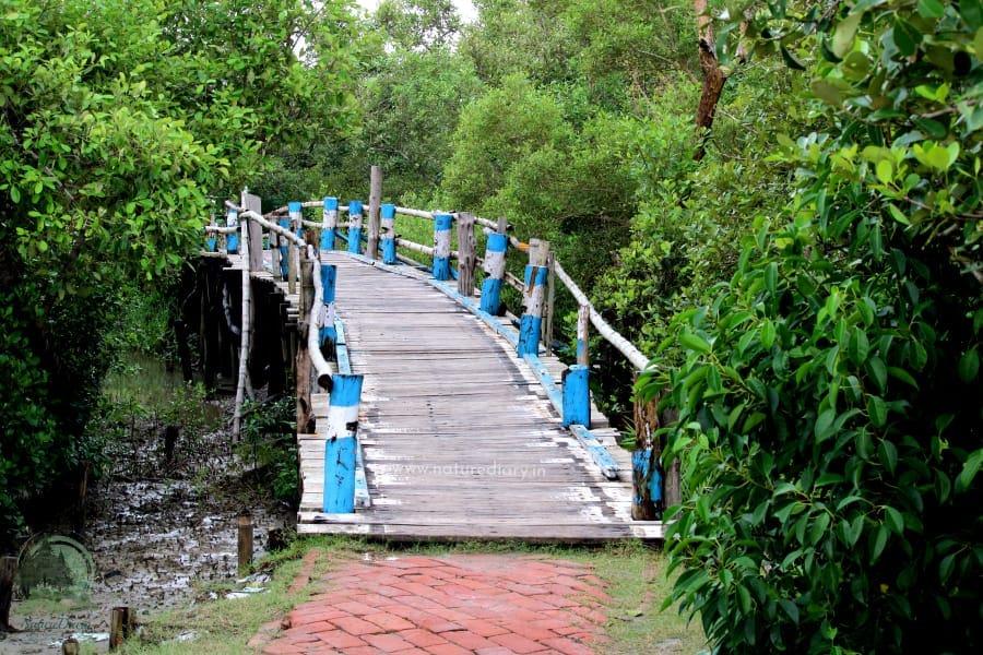 wooden bridge to Henry island sea beach
